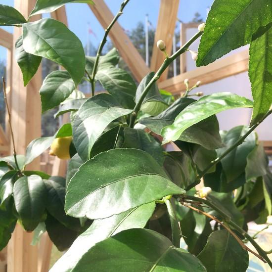 augalai-siltnamiuose-01