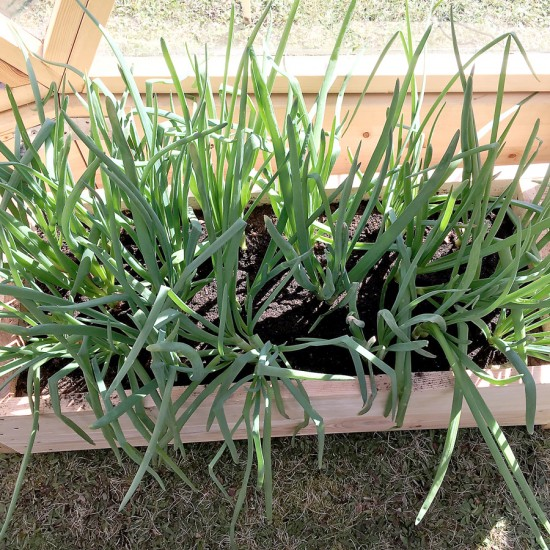 augalai-siltnamiuose-09
