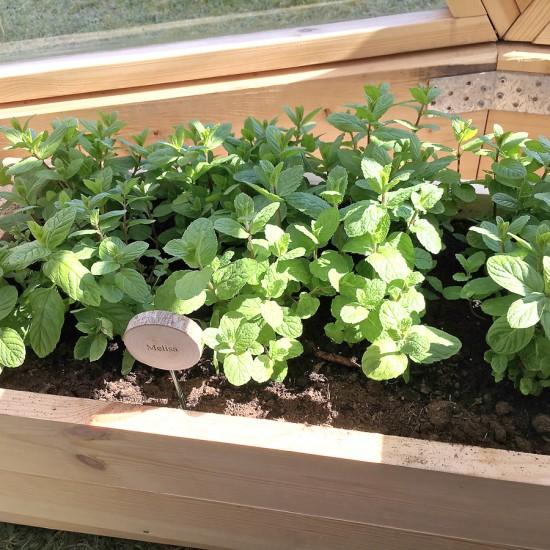 augalai-siltnamiuose-10
